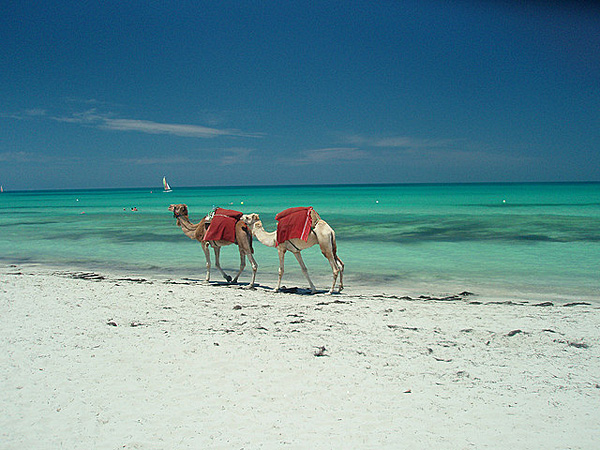 Djerba-2008-Beach_and_camels-alexandmac_a